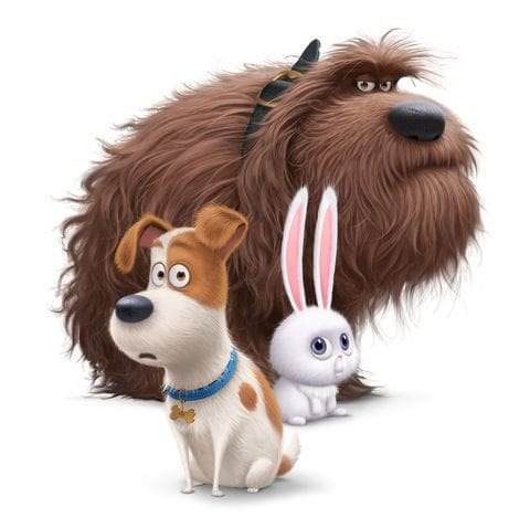 Family Movie Night at the Civic Plaza North Vancouver – The Secret Life of Pets