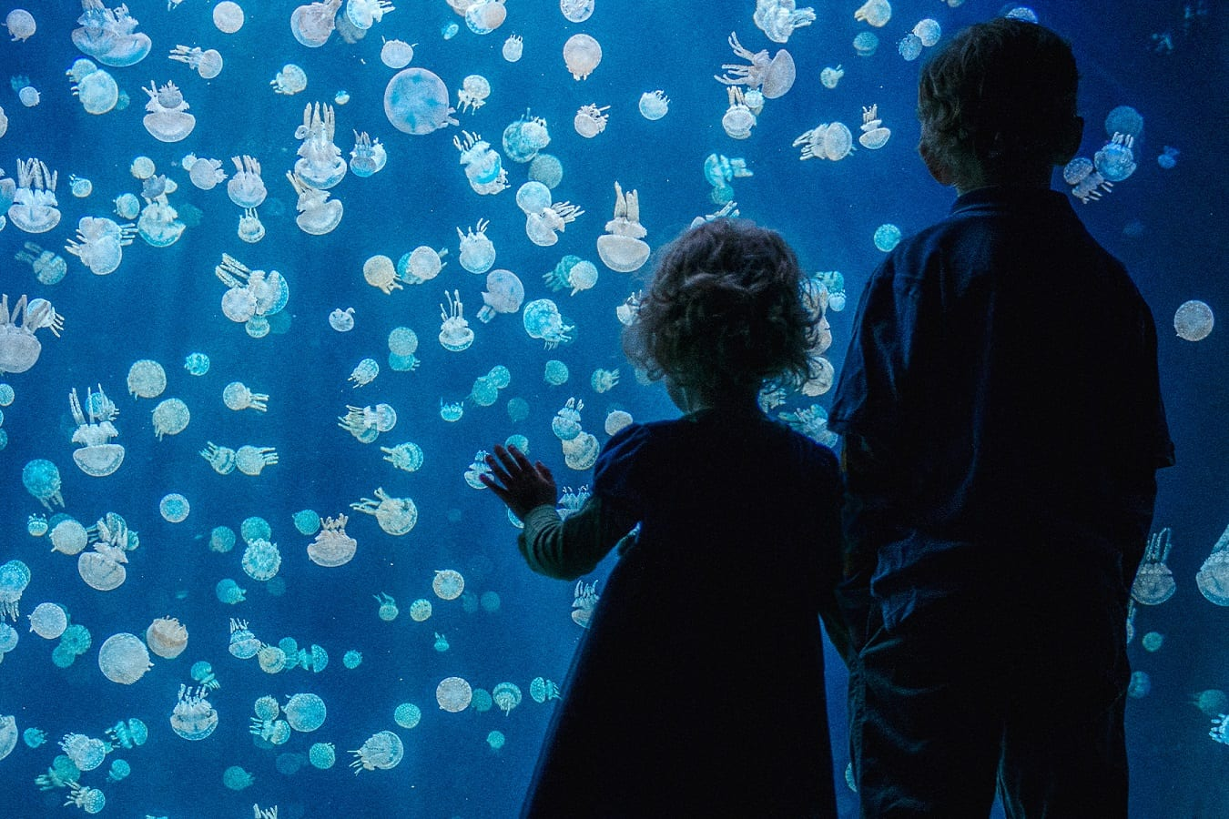Celebrate Family Day at Vancouver Aquarium