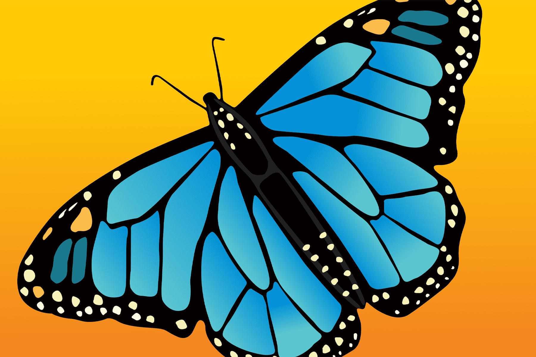Butterflies – Experience the Transformation