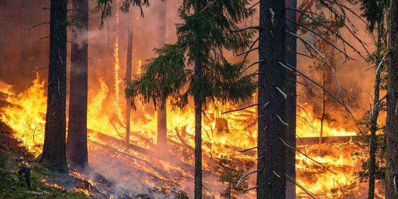 Hot Topics: Living with Wildfires — Free Panel Discussion