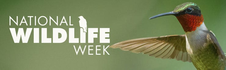 The Beasts of the North Shore:  A National Wildlife Week Event at the Parkgate Library