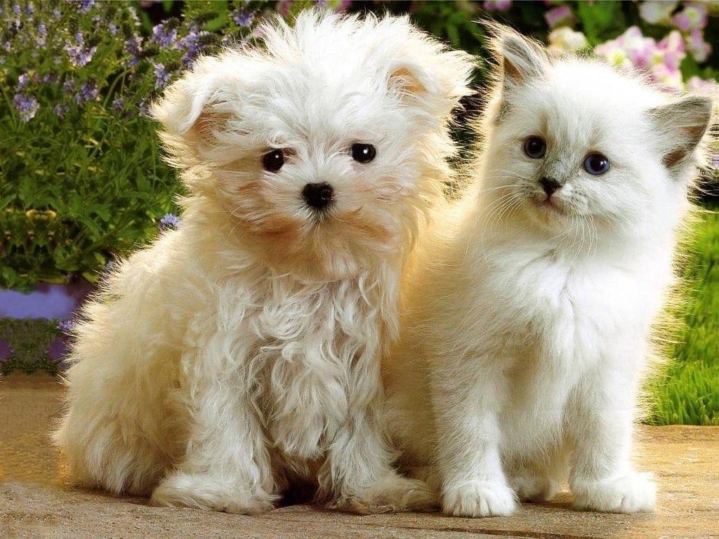 Pet Lover Show