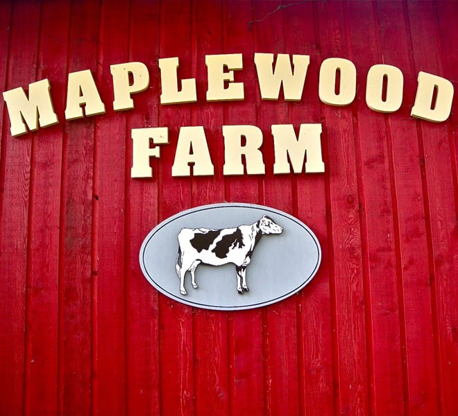 Behind the Scenes at Maplewood Farm North Vancouver