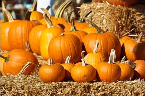 """Lynn Valley Parent Participation Preschool """"Great Pumpkin Patch"""""""