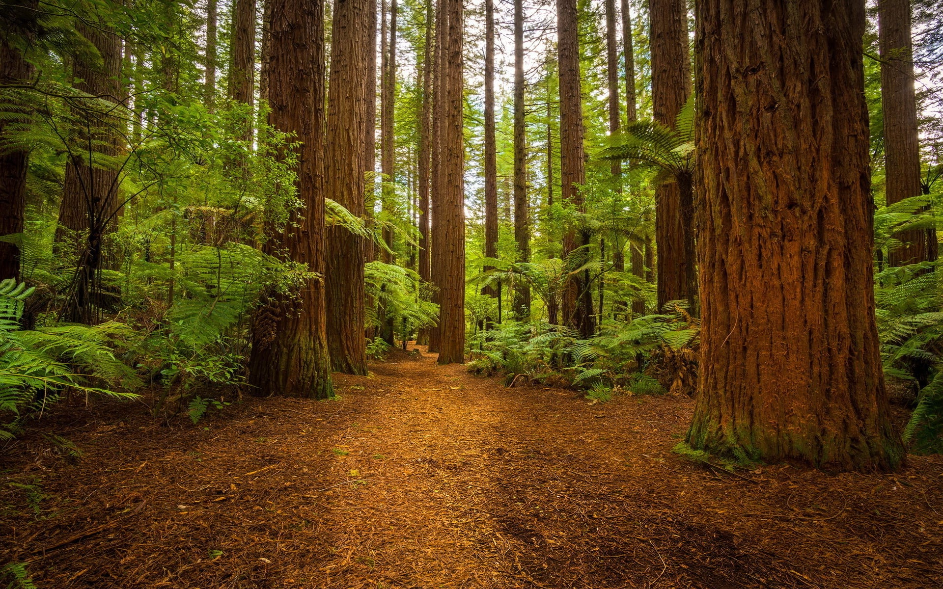 Celebrate Tree Day and Grandparents' Day with a Forest Adventure in North Vancouver