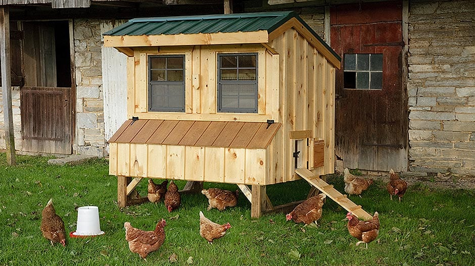 Workshop: Daily Eggs 101 – Keeping Chickens in the City at Queensbury Gardens