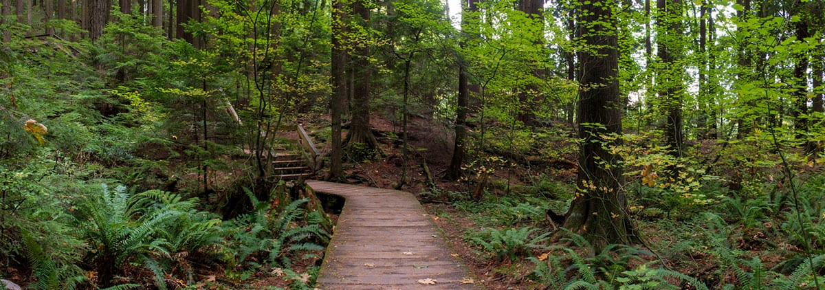 Weekly Mountaineering Pals Drop-In at Lynn Canyon Park